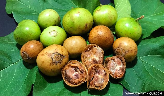 A popular wild fruit, the Spanish tamarind has many ...